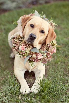 engagement puppy trend