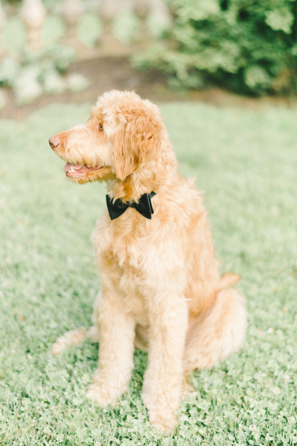 engagement puppy